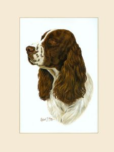 Original English Springer Spaniel Painting 2